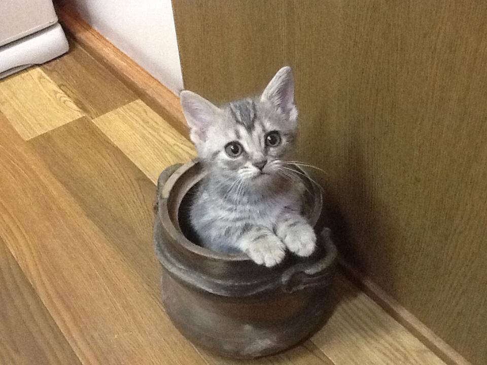 猫からマダニ感染症