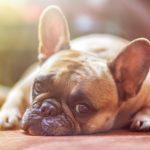 犬の結膜炎 目薬に人間用は使える?